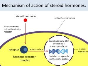 HGH steroids